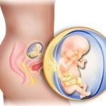 13.(trinaesta) nedelja trudnoće*