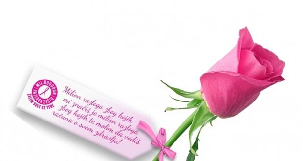 roze-ruza-kriva-620x330
