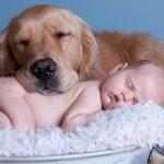 DA SE NAJEŽITE : Pas telom grejao bebu koja je ostavljena na -20C