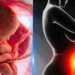 Da malo zavirimo i saznamo šta se to dešava kod mame u stomaku kad krene avantura zvana 9 meseci :)