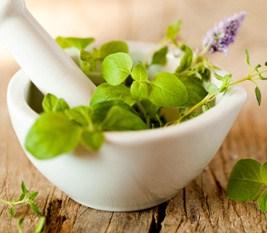 bosiljak-zacin-i-ljekovita-biljka-634668878236806015_267_233